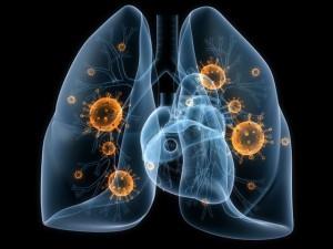 Исследователи раскрыли клеточный механизм, который защищает легкие при инфекциях