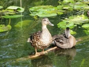 В России обнаружен птичий грипп у диких птиц