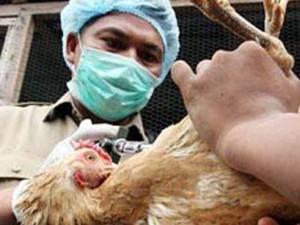 В Кузбассе проводят профилактику птичьего гриппа