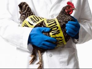 Вакцину от птичьего гриппа создали в США