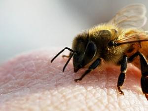 Пчелиная пыльца — аллергические реакции