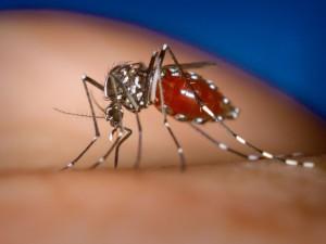 В Приамурье зарегистрированы три случая лихорадки Денге