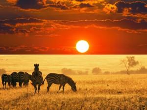Под самым небом Африки