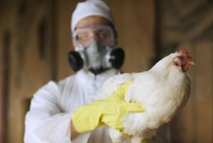В Атырау птичий грипп срывает охотничий сезон