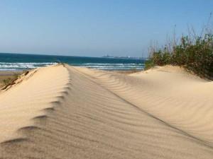 Песчаный пляж оказался источником смертельно опасных бактерий