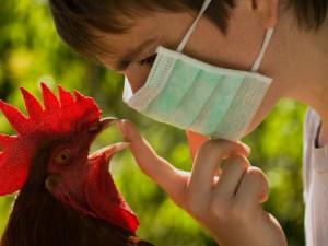 В Рыбинске начинается профилактика птичьего гриппа
