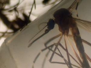 Вирус Зика мутирует в зависимости от региона Земли — ученые
