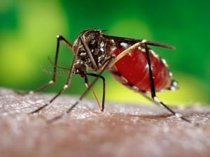 Высокие температуры способствуют развитию вируса Зика