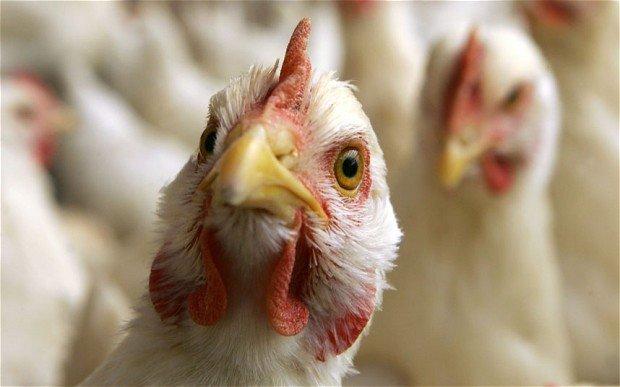 Китайские врачи вылечили птичий грипп у 44-летнего мужчины
