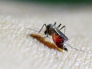 В Пекине зафиксировали первый случай вируса Зика
