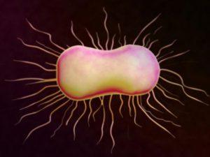 Как избежать инфекций мочевыводящих путей