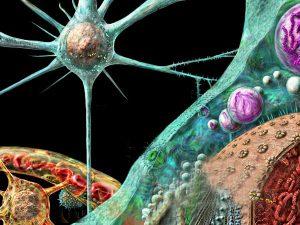 Прионные инфекции могут преодолевать межвидовой барьер