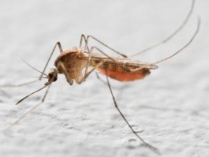 Первая вакцина от малярии оказалась неэффективной
