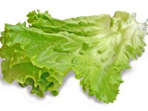 Лист салата спасет от туберкулеза