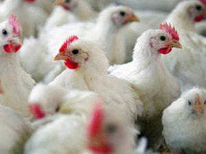 Ученые научились выявлять птичий грипп за полчаса