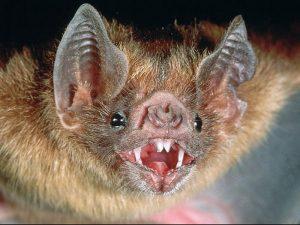 Летучие мыши – разносчики смертельной заразы, — ученые