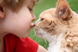 Медики: гладить кошек опасно для жизни