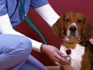 Ветеринарный терапевт, качественна забота о братьях меньших.