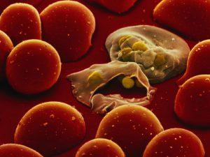 Малярийные паразиты заставляют москитов кусать людей чаще