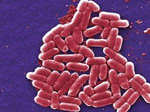 Бактерии стали устойчивыми задолго до антибиотиков