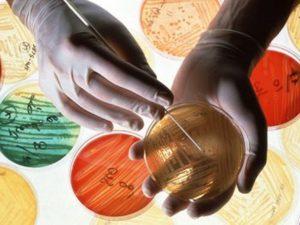 Жительница США скончалась от инфекции, стойкой ко всем антибиотикам