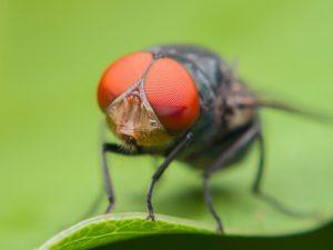 Гены устойчивости к антибиотикам разносят мухи и птицы