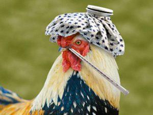Птичий грипп H7N9 меняется. В Китае обнаружен вирус-мутант
