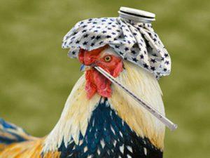 Подмосковный птичий грипп для людей не опасен