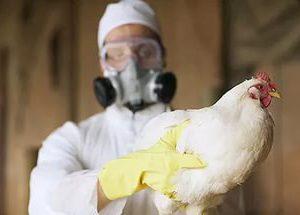 Роспотребнадзор предупреждает о смерти людей от птичьего гриппа в Китае