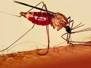 Ученые создали совершенную вакцину от малярии