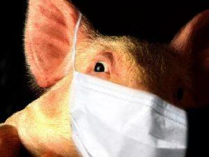 В Индии более 100 человек умерли от свиного гриппа