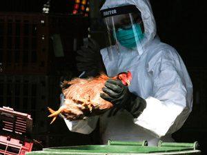 Власти предупредили о вероятном появлении в России опасного штамма гриппа