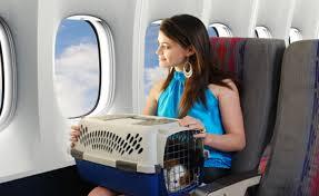 Животные на борту самолета