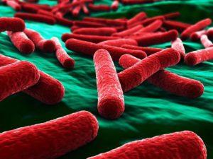 Ученые: стойкость к антибиотикам попадает в кровь через мочу