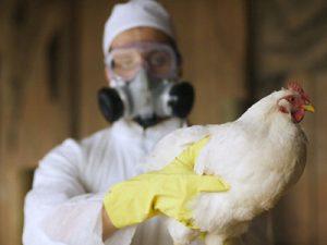 В Китае зарегистрирован новый случай заражения птичьим гриппом