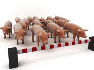 Свиной грипп унес 220 жизней в индийском штате Гуджарат