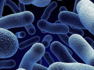 Бактерии способствуют росту клеток колоректального рака