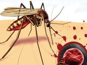Бороться с малярией можно при помощи садоводческих манипуляций
