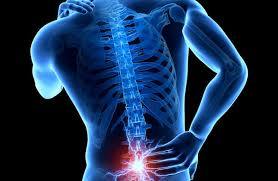 Изучение регенерации гекконов поможет человеку в лечении травм спины