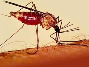 Малярия приспосабливается к лекарствам