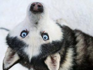 Еще у 5 собак обнаружен штамм собачьего гриппа