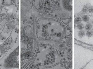 Американские ученые нашли неизвестный вирус