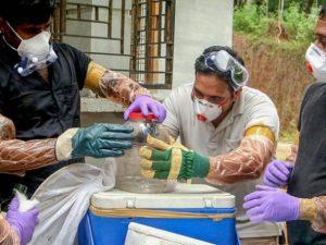 Смертельный вирус Нипах в Индии уносит жизни людей и создаёт панику среди населения во всём мире