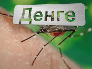 Зараженные лихорадкой денге комары помогли снизить заболеваемость в Австралии