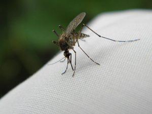 Вирус лихорадки Западного Нила найден в Чехии
