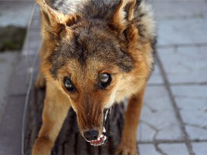 В Приамурье выявили семь случаев бешенства среди диких животных