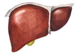 Зелень содержит вещества, защищающие здоровье печени