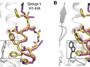 Разработаны пептидные ингибиторы вируса гриппа