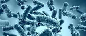 Обострения аутоиммунных заболеваний связали с микрофлорой