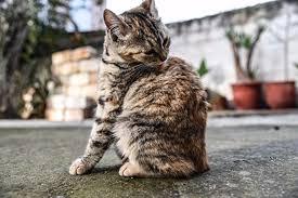 Домашние животные оказались источником неизлечимых инфекций